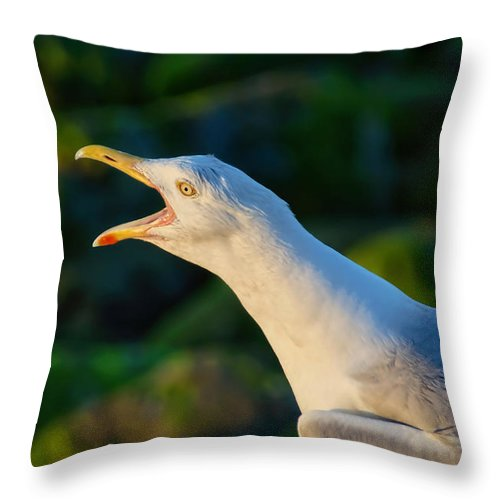 A Herring Gull Squawks A Wake-up Call Early Morning At Lyme Regis Throw Pillow featuring the photograph Wakey Wakey by Susie Peek