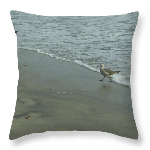 Sea Gull Throw Pillow featuring the photograph Walking Away by Mithayil Lee