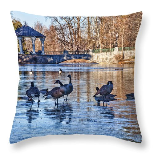Mallard Duck Throw Pillow featuring the photograph Walking On Thin Ice by Diane Macdonald
