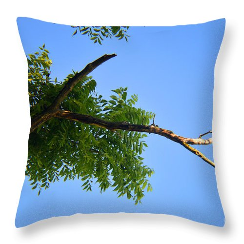 Walnut Throw Pillow featuring the photograph Walnut In The Sky by Tina M Wenger