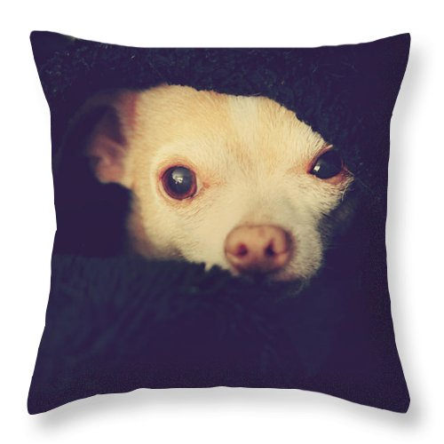 Chihuahuas Throw Pillow featuring the photograph Warm And Cozy by Laurie Search
