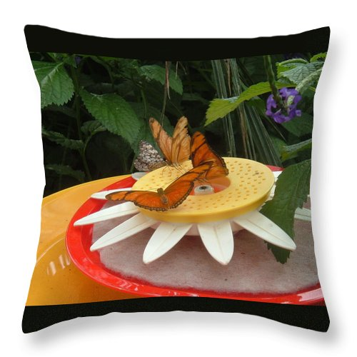 Butterfly Throw Pillow featuring the photograph Warm Colorful Butterflies by Barbara McDevitt