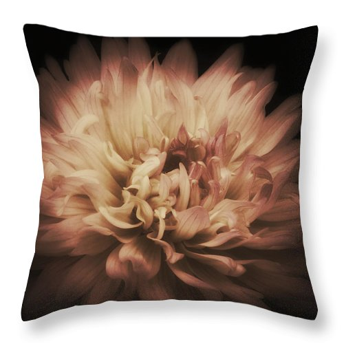Dahlia Throw Pillow featuring the photograph Warmth Of A Dahlia by Tammy Garner