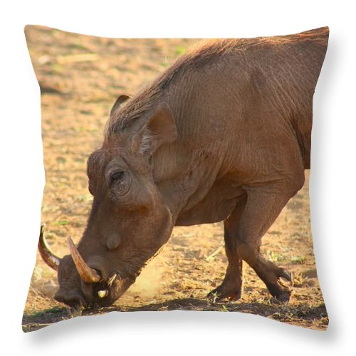 Warthog Throw Pillow featuring the photograph Warthog by Amanda Stadther