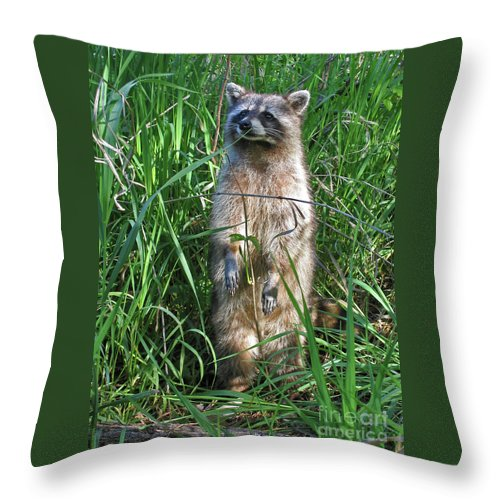 Raccoon Throw Pillow featuring the photograph Wary by Ann Horn