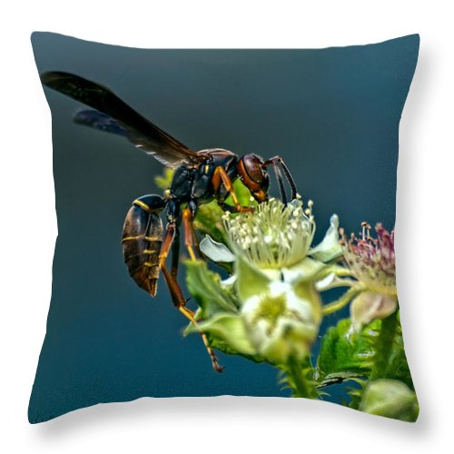 Wasps Throw Pillow featuring the photograph Wasp by Bob Orsillo