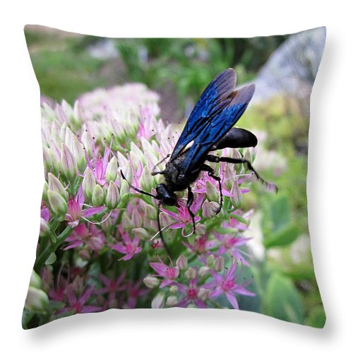Wasp Throw Pillow featuring the photograph Wasp On Sedum by MTBobbins Photography
