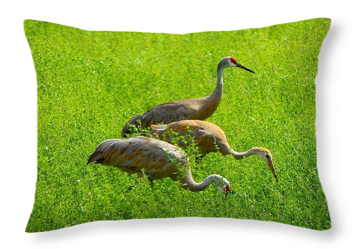 Sandhill Crane Throw Pillow featuring the photograph Watch Out by Kimberly Woyak