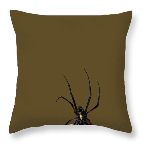 Spider Throw Pillow featuring the photograph Watch Out by Raymond J Deuso
