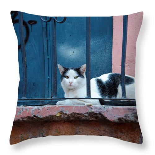 Travel Throw Pillow featuring the photograph Watchful Cat, Mexico by John Shaw