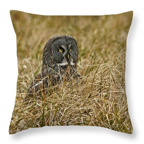 Great Grey Owl Throw Pillow featuring the photograph Watchful Eyes Of The Great Gray Owl by Inspired Nature Photography Fine Art Photography