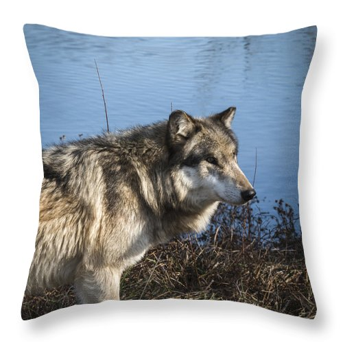 Animal Throw Pillow featuring the photograph Watchful by Jack R Perry