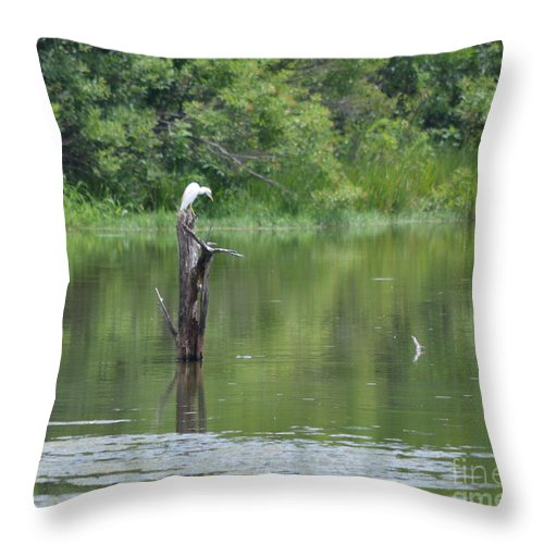 Egrets Throw Pillow featuring the photograph Watching And Waiting by Ruth Housley