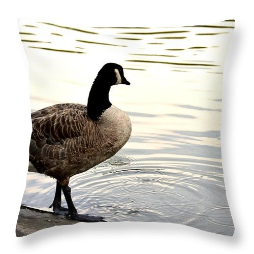 Watching Throw Pillow featuring the photograph Watching From Afar by Maria Urso