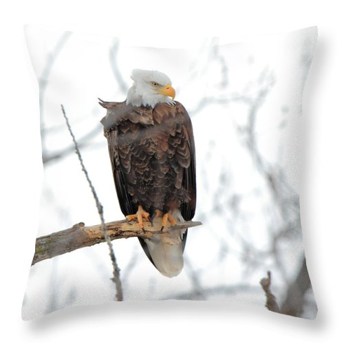 American Bald Eagle Throw Pillow featuring the photograph Watching Out by Coby Cooper