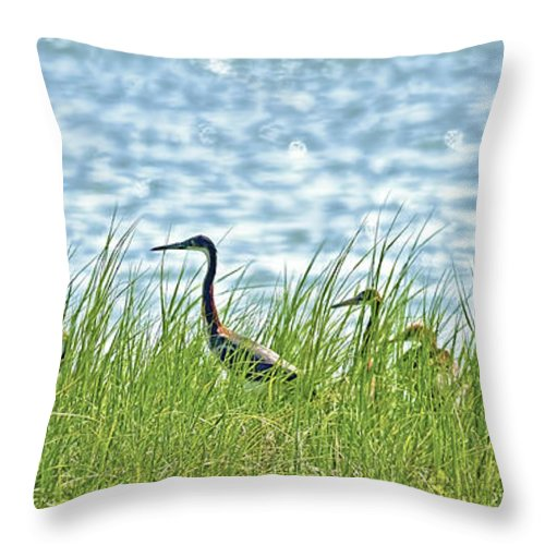 Watching The Race Throw Pillow featuring the photograph Watching The Race by Gary Holmes