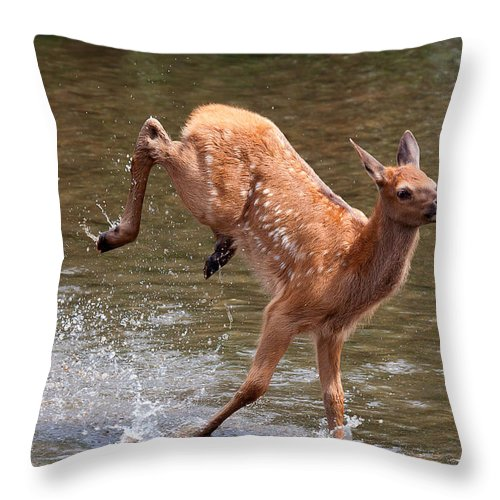 Elk Throw Pillow featuring the photograph Water Baby by Jim Garrison