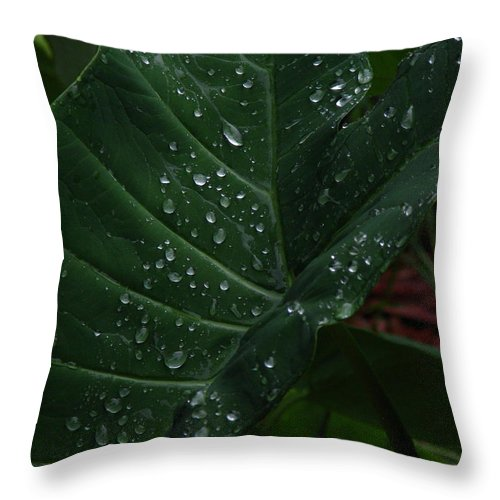 Patzer Throw Pillow featuring the photograph Water In My Ear by Greg Patzer