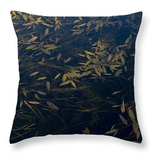 Leaves Throw Pillow featuring the photograph Water Leaves by Gary Eason