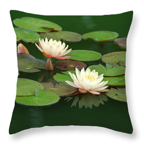 Water Lily Throw Pillow featuring the photograph Water Lilies I by Suzanne Gaff