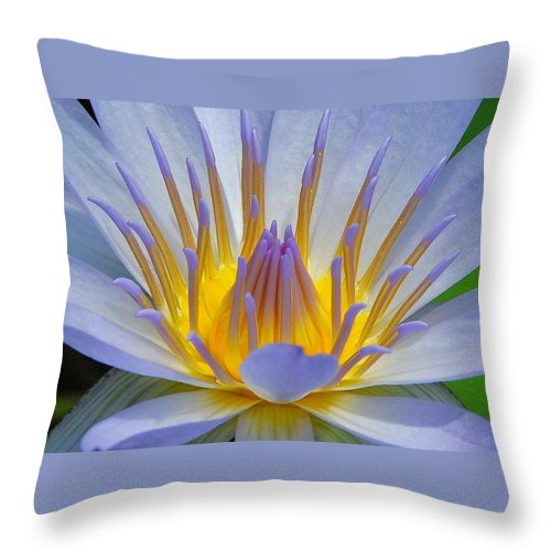 Water Lillies Throw Pillow featuring the photograph Water Lily 18 by Allen Beatty