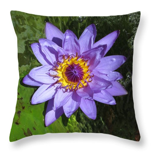 Water Lily Throw Pillow featuring the photograph Water Lily 2013 by Elle Nicolai