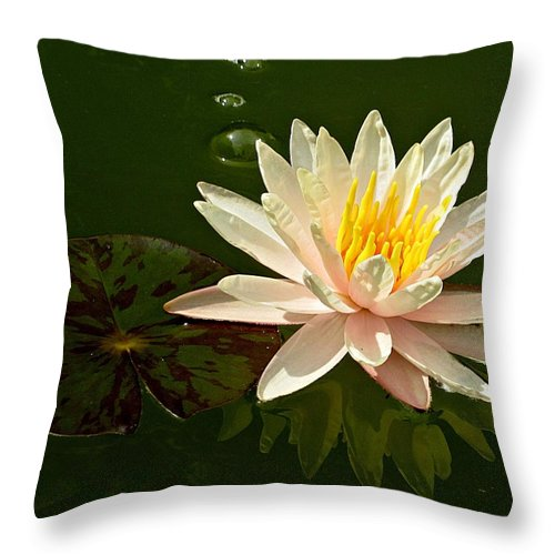 Water Lily Throw Pillow featuring the photograph Water Lily And Pad by MTBobbins Photography