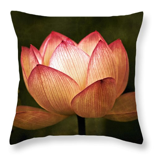 Water Lily Throw Pillow featuring the photograph Water Lily by Ben Bassey