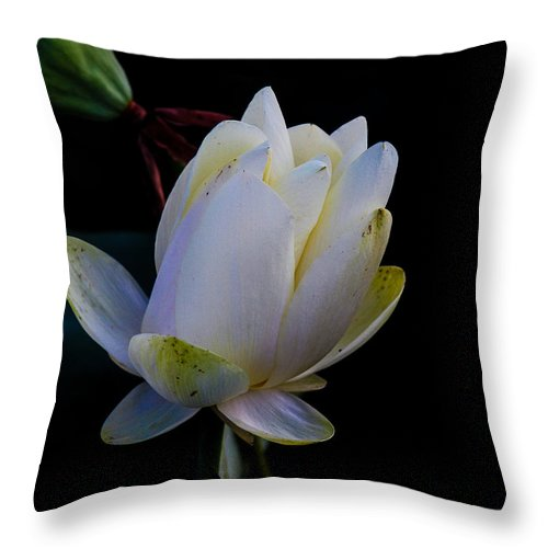 Water Lilly Blossom Throw Pillow featuring the photograph Water Lily Blossom In Shadows by Harold Hopkins