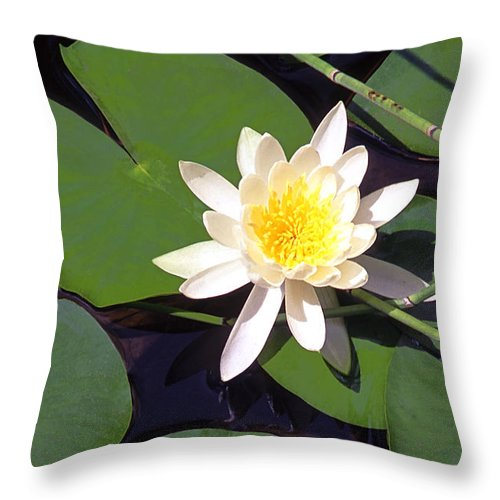 Lilies Throw Pillow featuring the photograph Water Lily I I I by Jim Smith