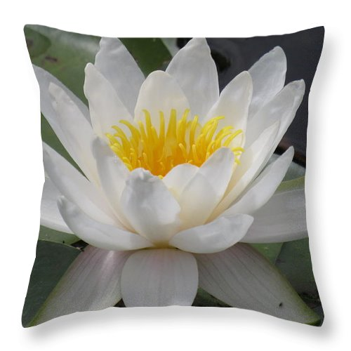 2 Water Lilies Throw Pillow featuring the photograph Water Sprites by Barbara Ebeling
