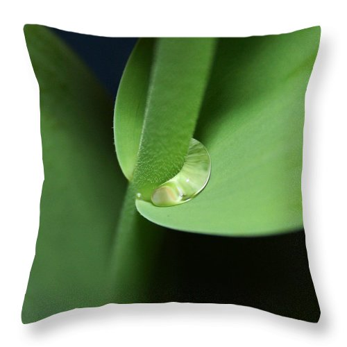 Fine Art Throw Pillow featuring the photograph Water Worm by Linda Sannuti