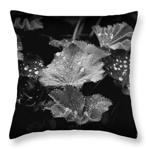 Leaf Throw Pillow featuring the photograph Waterdroplets by Four Hands Art