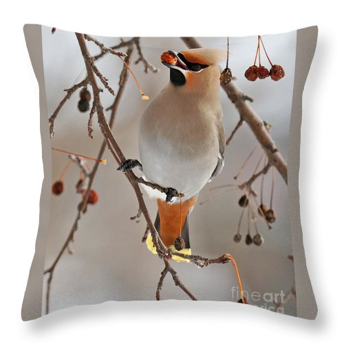 Waxing Throw Pillow featuring the photograph Waxing Eating by Lloyd Alexander