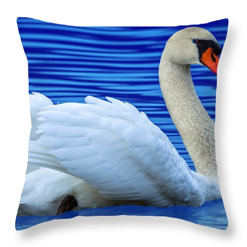 Avian Throw Pillow featuring the photograph Wayward Swan 2 by Brian Stevens