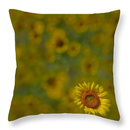 Petals Throw Pillow featuring the photograph We Worship The Sun by Susan Candelario