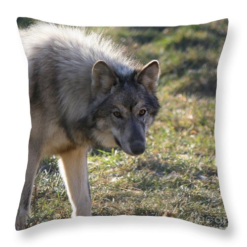 Wolf Throw Pillow featuring the photograph Weary Stance by Neal Eslinger