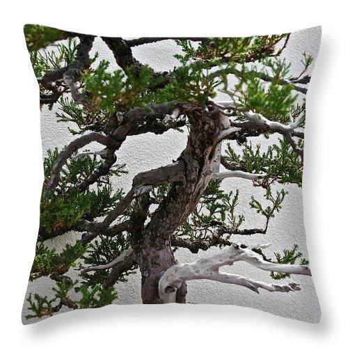 Bonsai Throw Pillow featuring the photograph Weathered Bonsai by Susan Herber