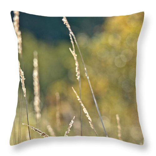 Throw Pillow featuring the photograph Weeds And Bokeh by Cheryl Baxter