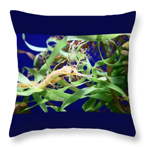 Weedy Sea Dragon Throw Pillow featuring the photograph Weedy Sea Dragon by Ellen Henneke