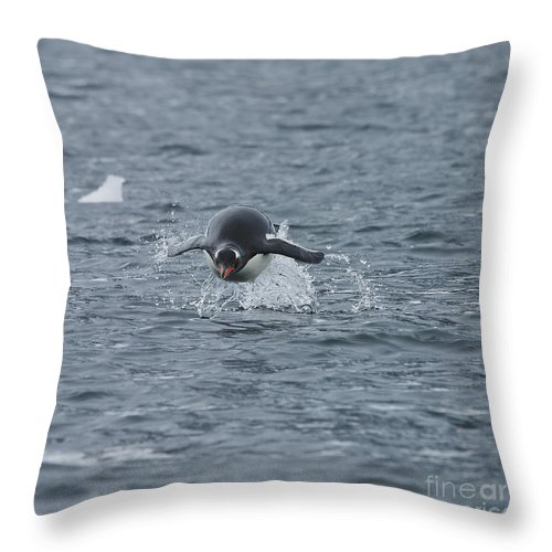 Nina Stavlund Throw Pillow featuring the photograph Weee... Here I Come.. by Nina Stavlund