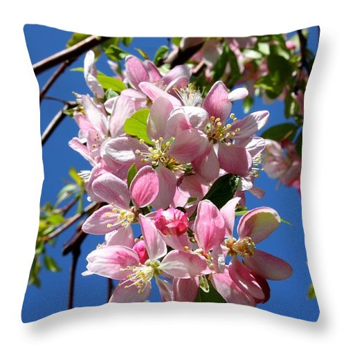 Weeping Cherry Tree Blossoms Throw Pillow featuring the photograph Weeping Cherry Tree Blossoms by Carol Groenen