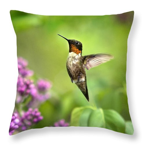 Hummingbird Throw Pillow featuring the photograph Welcome Home Hummingbird by Christina Rollo