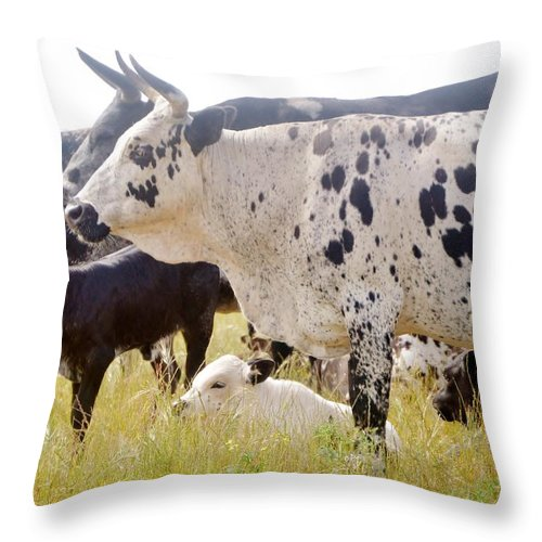 Black And White; Cows; Watching Out; Calf's; Meadow; South Africa; Swartland; Animals; Farmland; Farm Animals; Throw Pillow featuring the photograph Well Looked After by Werner Lehmann