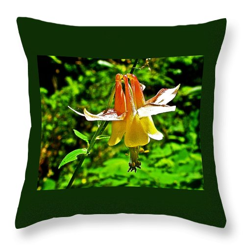 Western Columbine Along Wapta Falls Trail In Yoho National Park-british Columbia Throw Pillow featuring the photograph Western Columbine Along Wapta Falls Trail In Yoho National Park-british Columbia by Ruth Hager