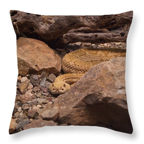 Rattlesnake Throw Pillow featuring the photograph Western Diamondback Rattlesnake by Douglas Barnett
