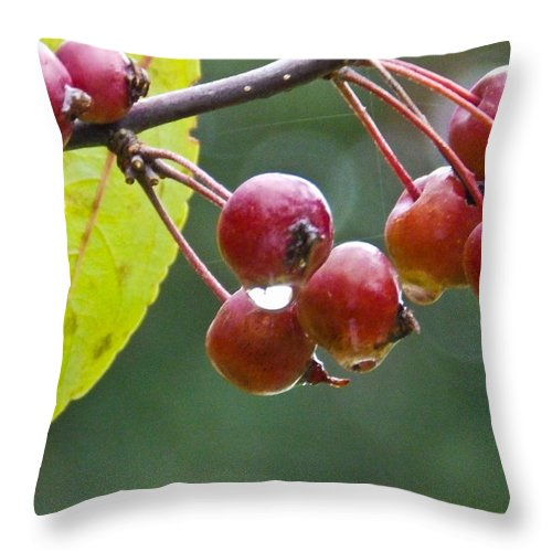 Rain Throw Pillow featuring the photograph Wet Crab Apples by Nick Kirby