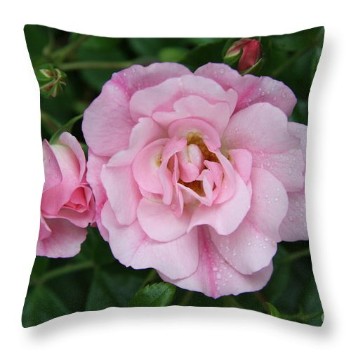 Rose Throw Pillow featuring the photograph Wet Prettiness by Christiane Schulze Art And Photography