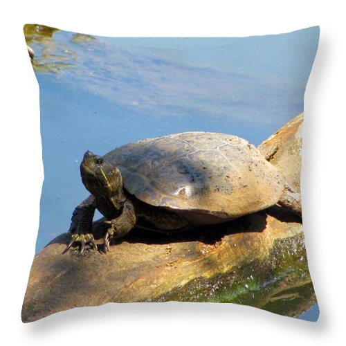 Turtle Throw Pillow featuring the photograph What A Life by Jennie Richards