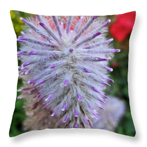 Flower Throw Pillow featuring the photograph What Am I by June Hatleberg Photography